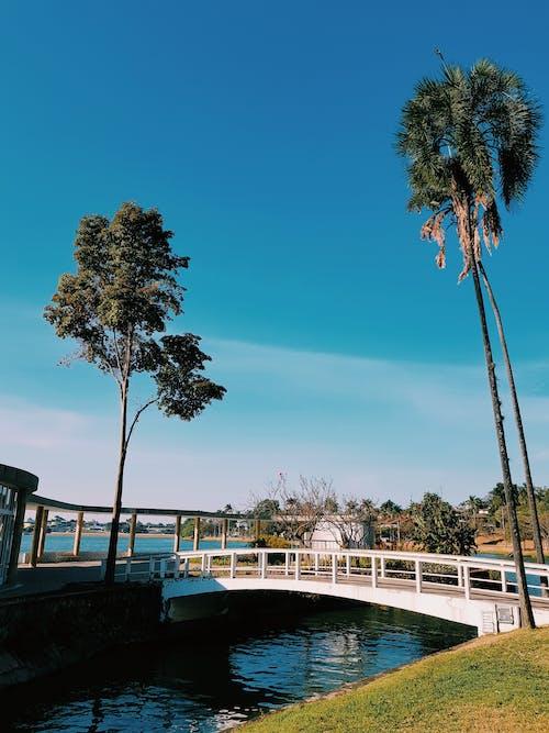 ブリッジ, ベロオリゾンテ, ミナスジェライス, ヤシの木の無料の写真素材
