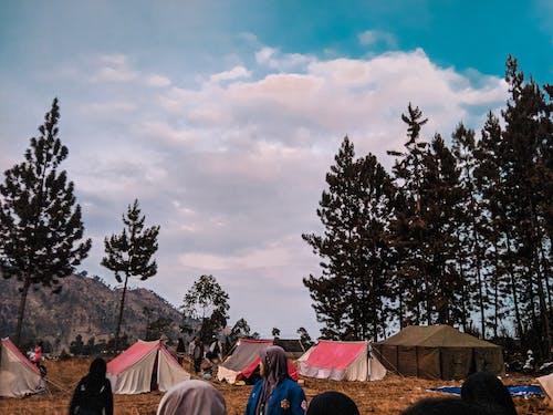 Imagine de stoc gratuită din arbore de cauciuc, aventură, camping, codru