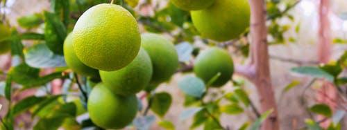 Kostenloses Stock Foto zu früchte, grün orange