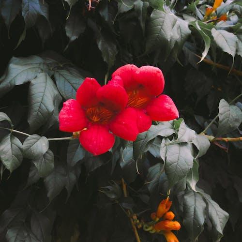Бесплатное стоковое фото с красивые цветы, осенние цвета, цветение, цветок