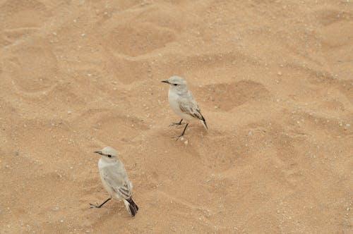 HDの壁紙, アフリカ, ナミビア, バードウォッチングの無料の写真素材