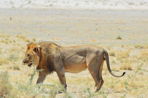 HDの壁紙, アフリカ, ナミビア, ロック画面の壁紙の無料の写真素材