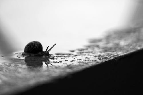 Grayscale Photography Of Snail
