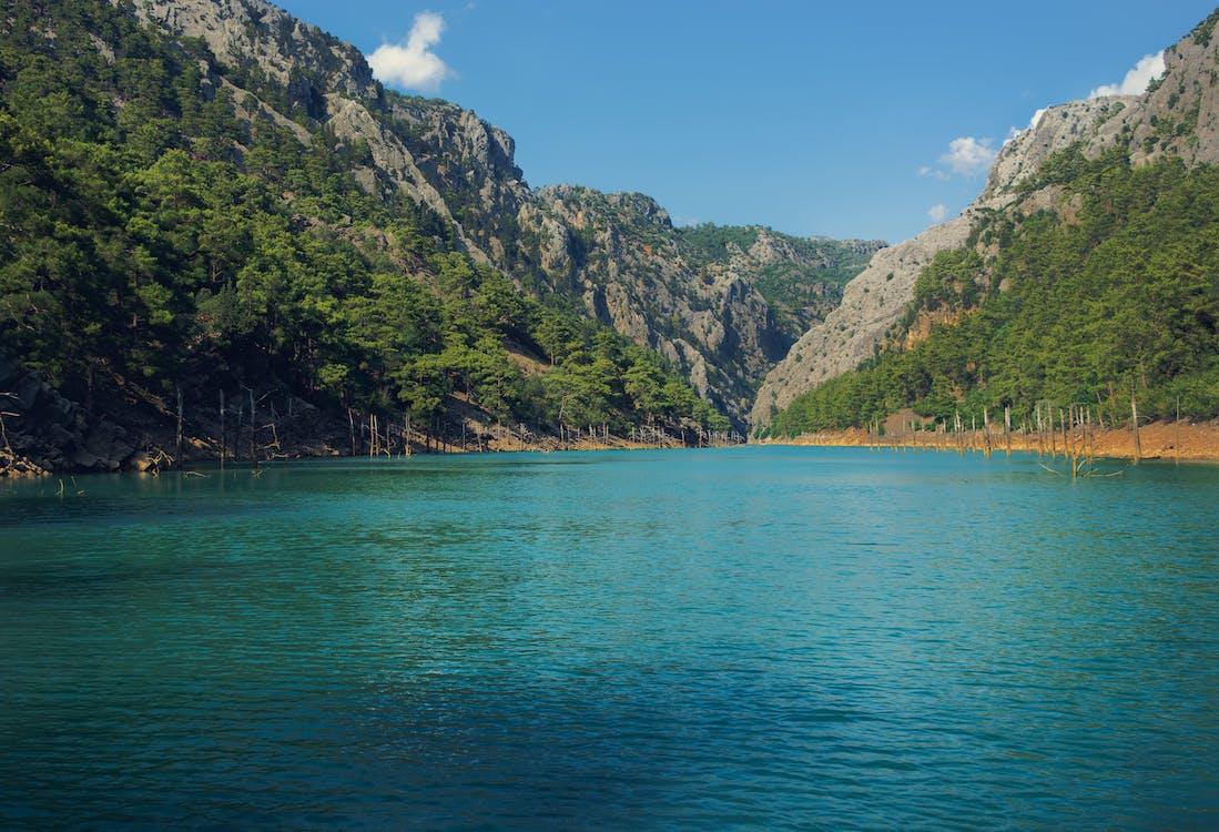 eau, forêt, lac