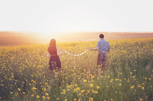 Woman and Man Walking on Yellow Petaled Flower Field