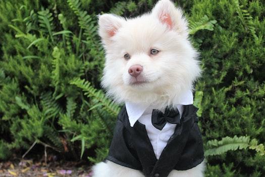 Free stock photo of summer, animal, dog, pet