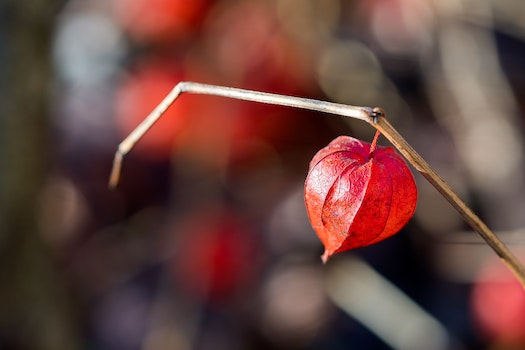 Free stock photo of nature, red, love, heart