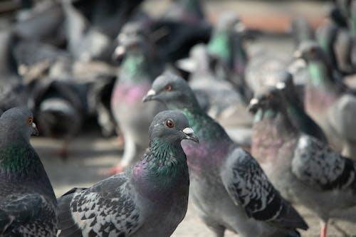 Free stock photo of bird, birds, blur, blurred