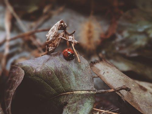 Photos gratuites de animal, automne, beetle, brouiller