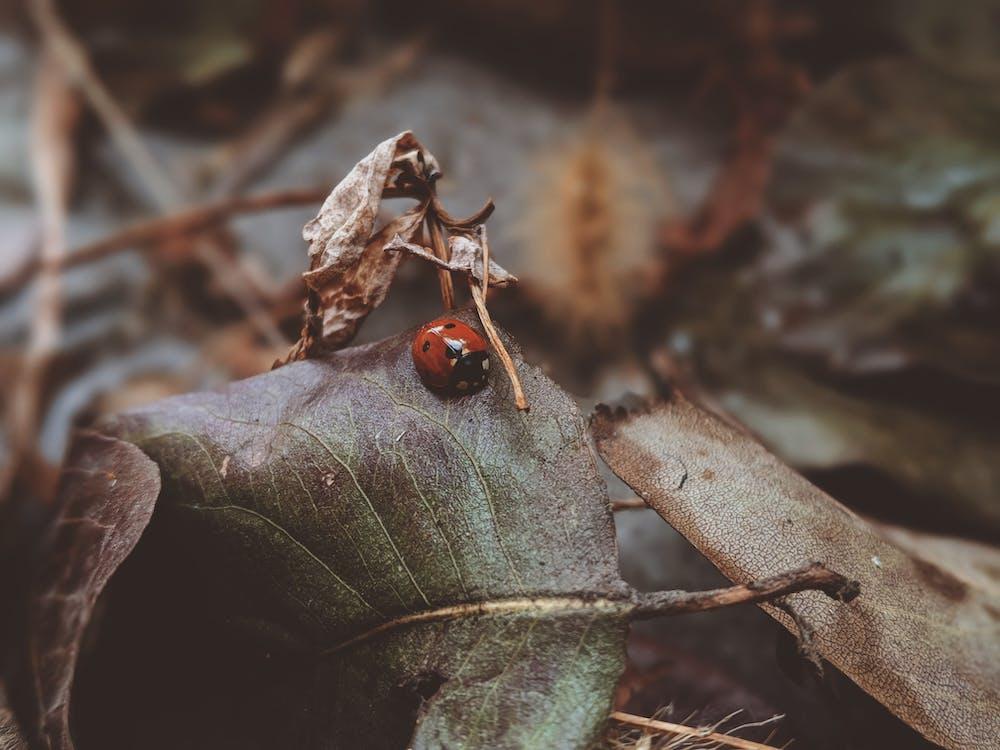 animal, automne, beetle