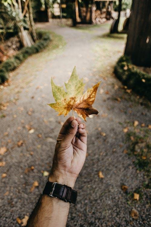 Gratis stockfoto met blad, hand, macro, vasthouden