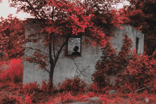 Red Trees Beside Abandoned House