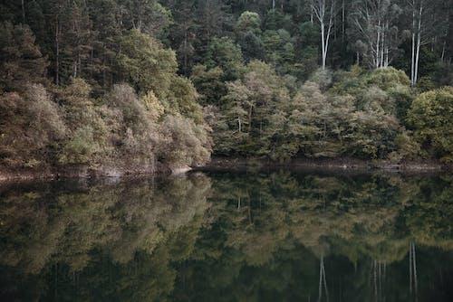 Ingyenes stockfotó erdőség, fák, sűrű erdő, tiszta víz témában