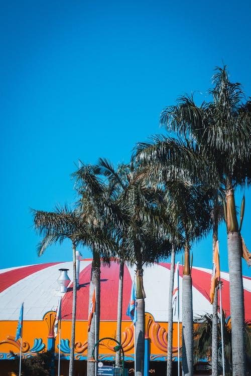 Gratis lagerfoto af palmer, træer