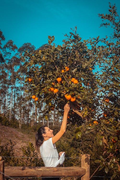 Foto De Mulher Pegando Laranja Na árvore