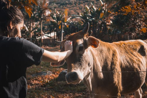Photo Of Woman Petting A Cow