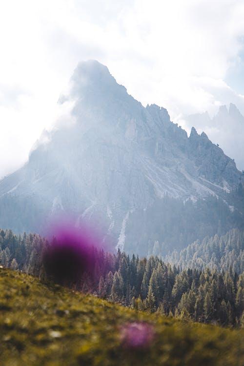 denní, divočina, fotografie přírody