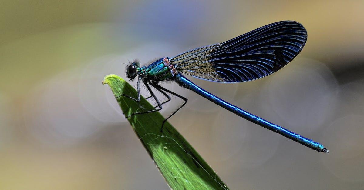 Pics black winged dragonfly, best teen redhead porn