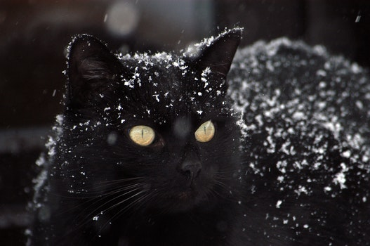 Free stock photo of snow, winter, animal, pet