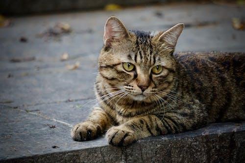 Photos gratuites de chat