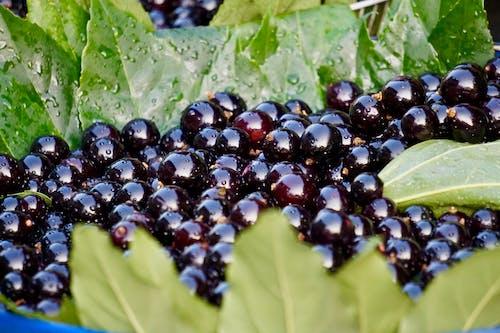 Photos gratuites de raisins