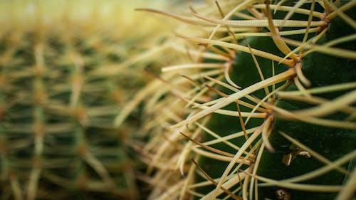 Bahçe, bitkiler, doğa, kaktüs içeren Ücretsiz stok fotoğraf