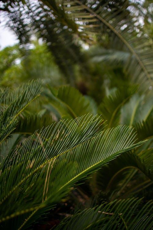 ağaçlar, Bahçe, doğa, makro içeren Ücretsiz stok fotoğraf