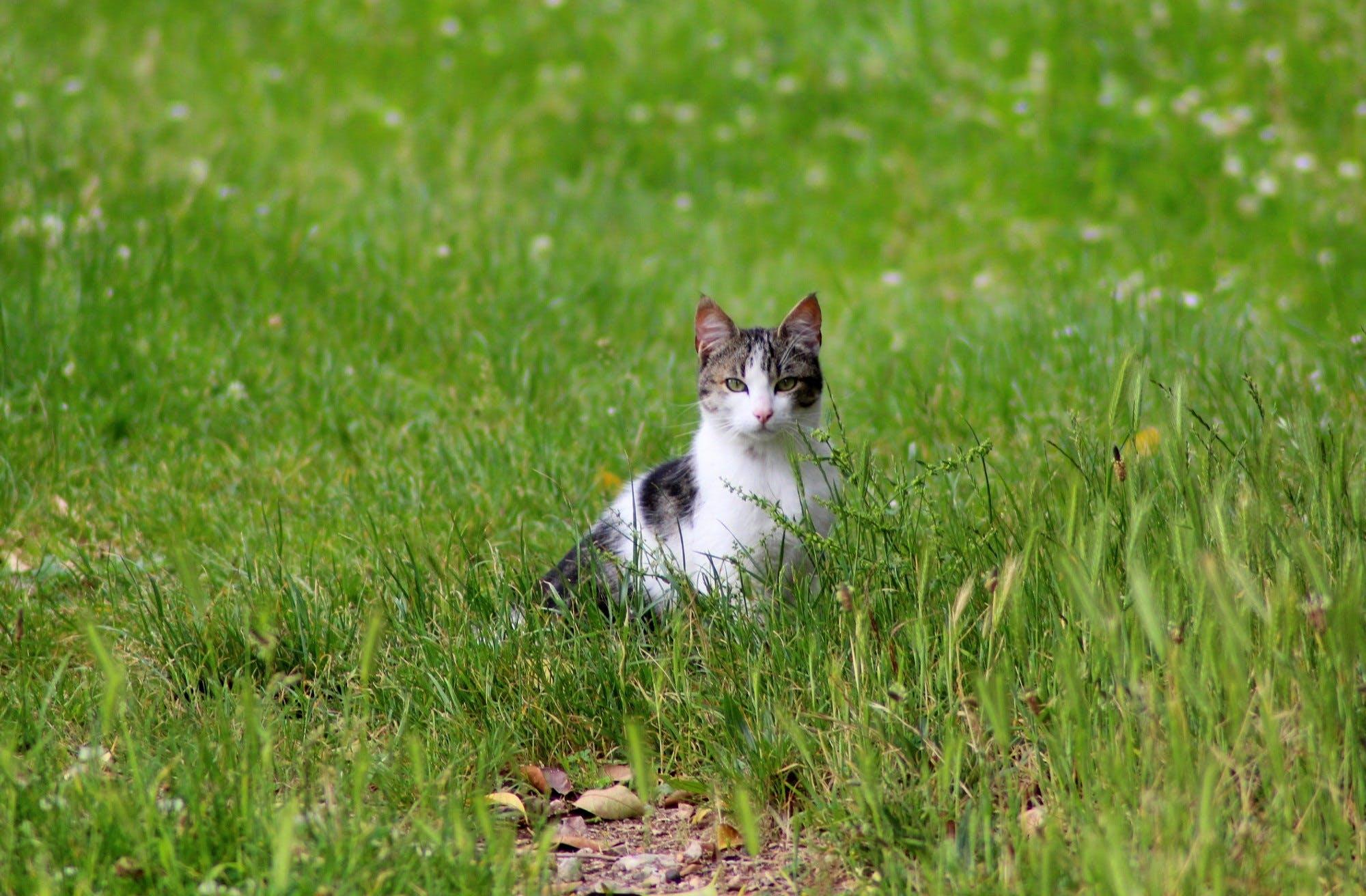 Free stock photo of animal, green, cat, herbs