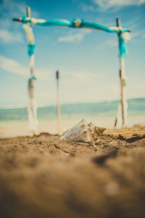 White Seashell On Shore