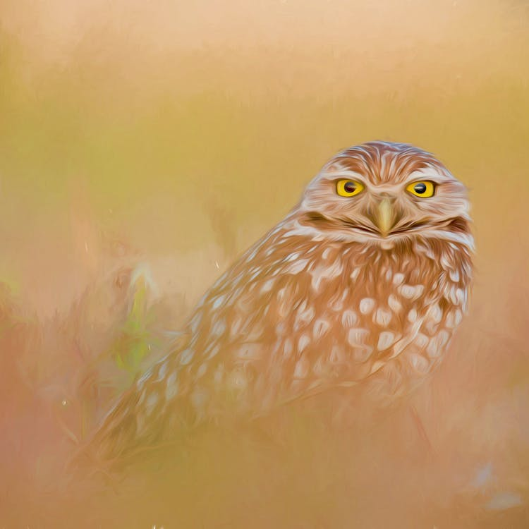Free stock photo of art, artwork, bird of prey