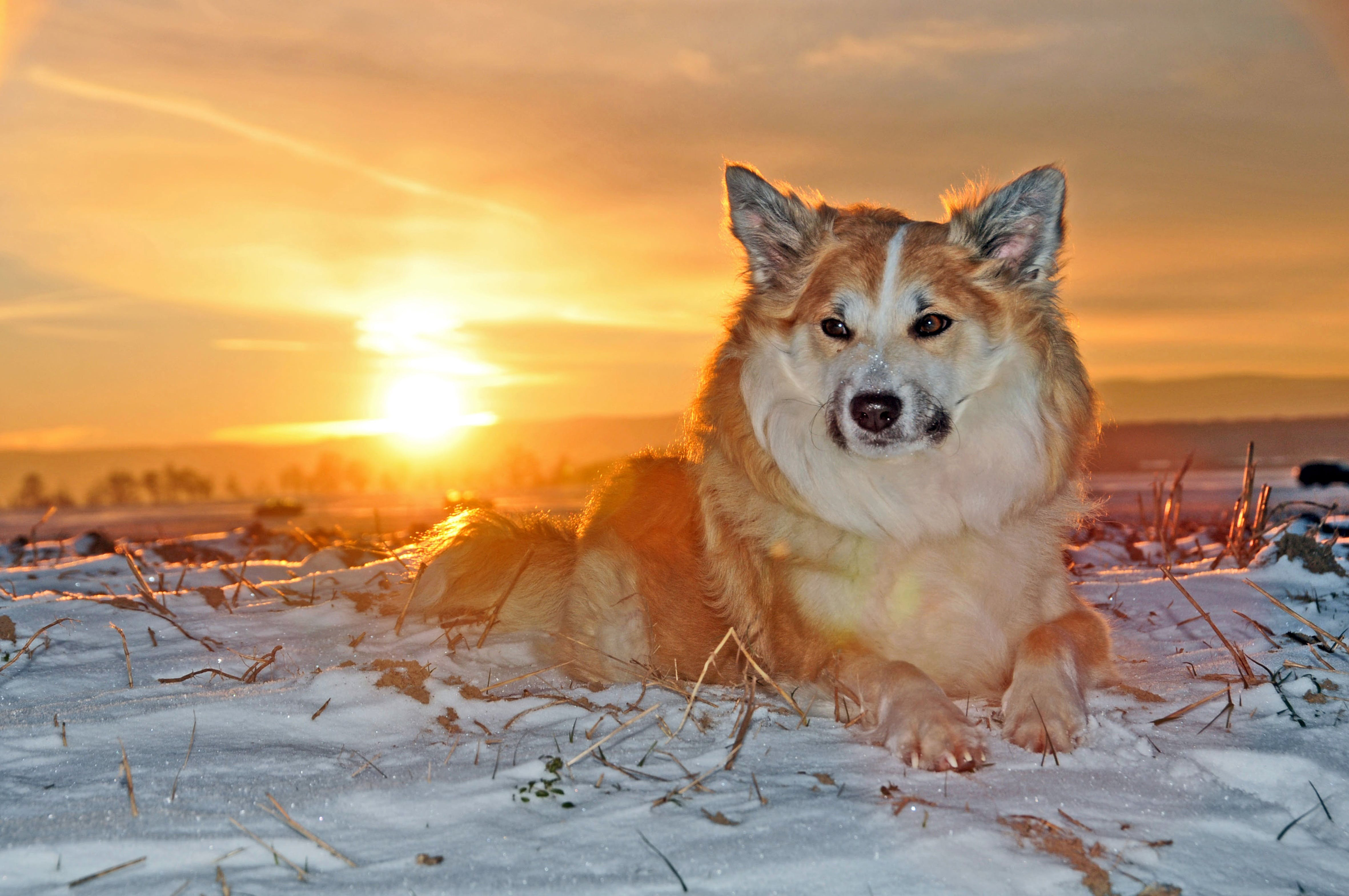 Free stock photo of cold, snow, winter, dog