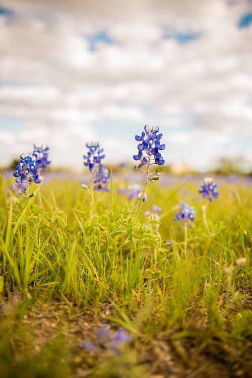 Fotos de stock gratuitas de campo, césped, flor, flora