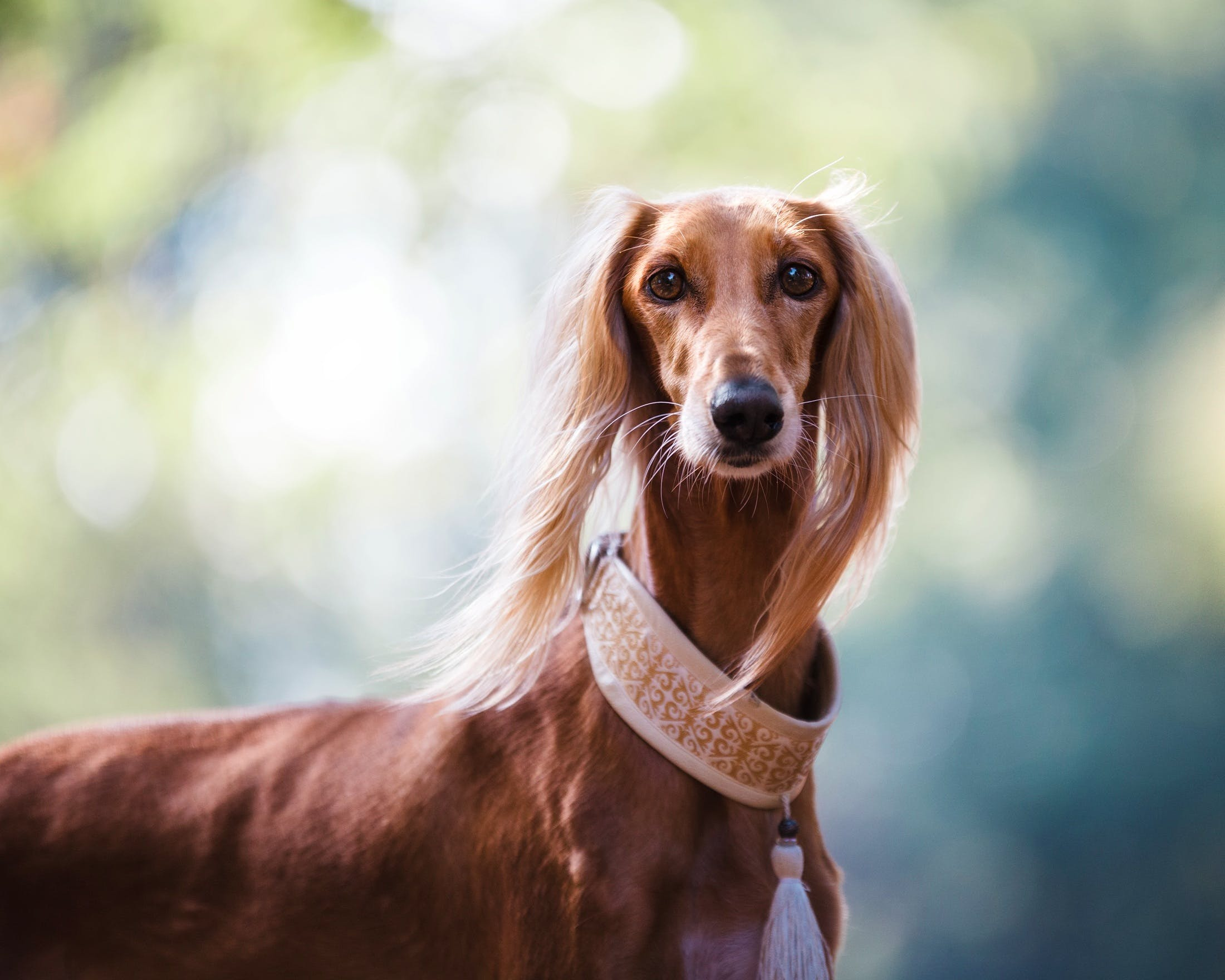 Free stock photo of nature, animal, dog, pet