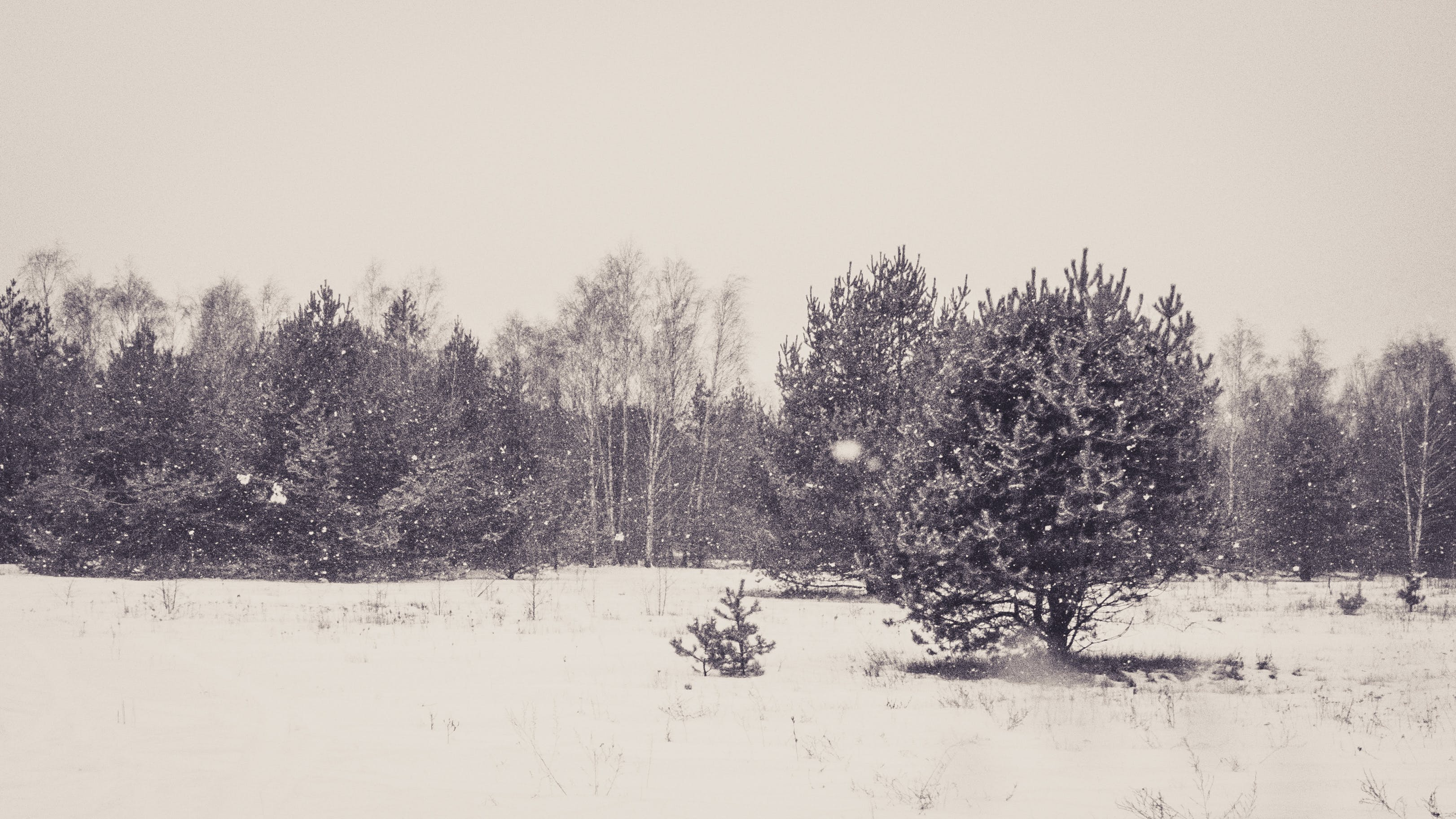 Free stock photo of black and white, cold, forest, grey