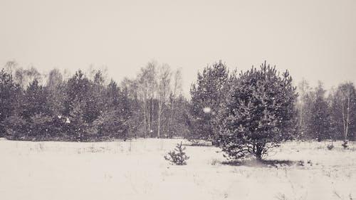 グレー, コールド, 冬の無料の写真素材