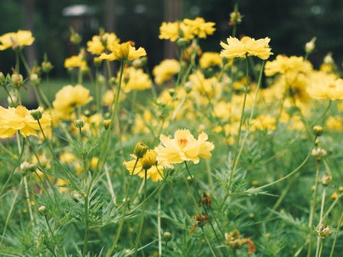 美麗的花朵 的 免費圖庫相片