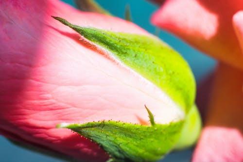 Foto profissional grátis de ao ar livre, aumento, beleza na natureza, cabeça de flor