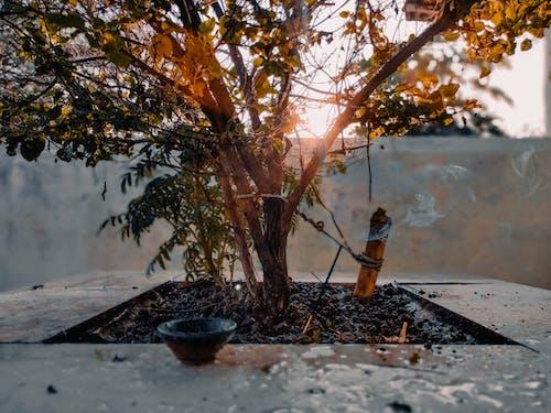 Gratis lagerfoto af linsebrydning, solflare, solopgang, Solskær