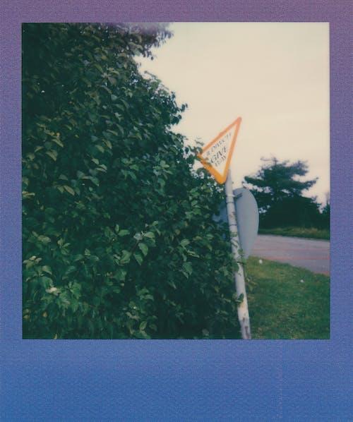 Fotos de stock gratuitas de al aire libre, árbol, brillante, calle