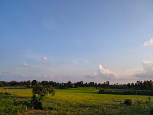 Gratis lagerfoto af blå himmel, græsmark