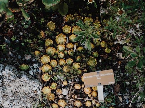 Fotobanka sbezplatnými fotkami na tému rastliny, sukulent, sukulentná rastlina