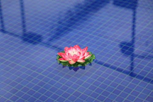 Ilmainen kuvapankkikuva tunnisteilla allas, iiris, kukka
