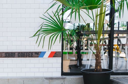 Foto d'estoc gratuïta de planta d'interior, planta en test, Planta verda