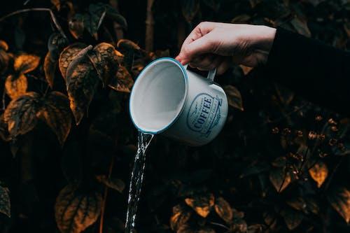 Foto d'estoc gratuïta de abocant, abocar, aigua, beguda