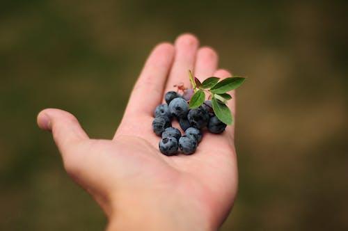 Immagine gratuita di azzurro, blackberry, blu, cibo