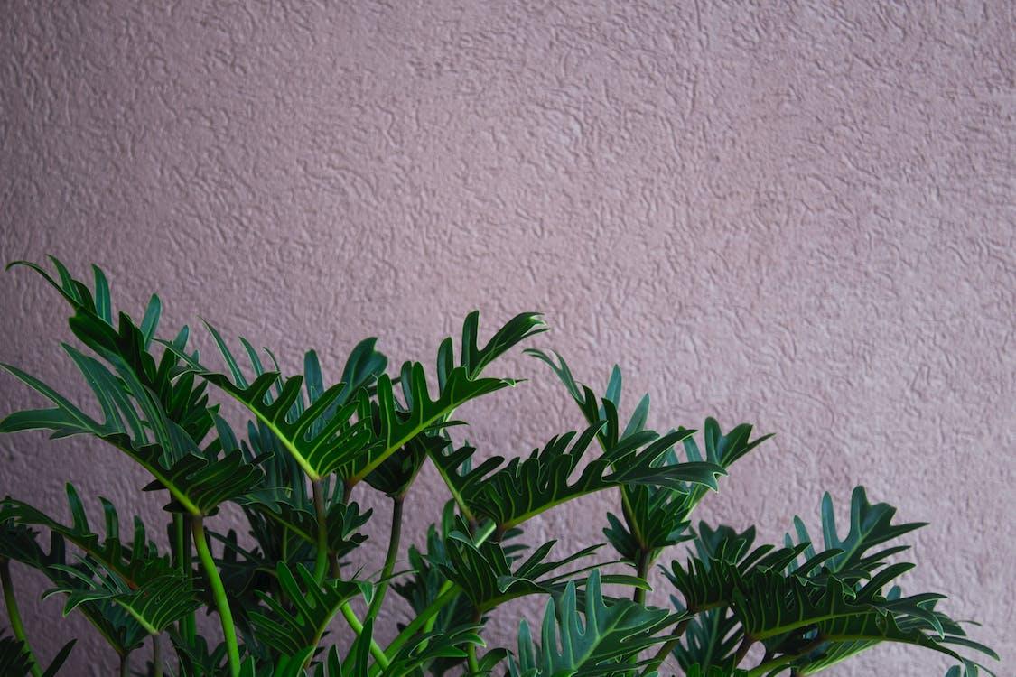 ciemnozielone rośliny, ciemnozielony, duże liście