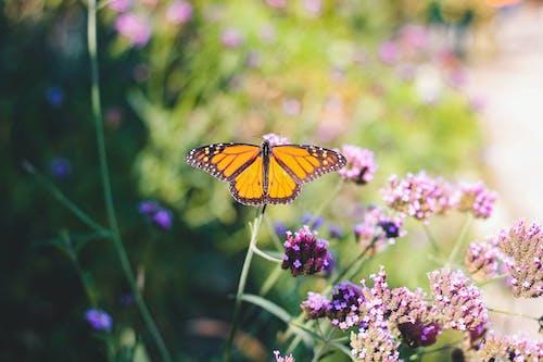 คลังภาพถ่ายฟรี ของ กลางแจ้ง, การถ่ายภาพแมลง, การถ่ายเรณู, การเจริญเติบโต