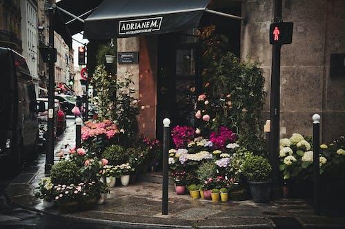 Gratis lagerfoto af aktie, arkitektur, blomster, blomsterbutik