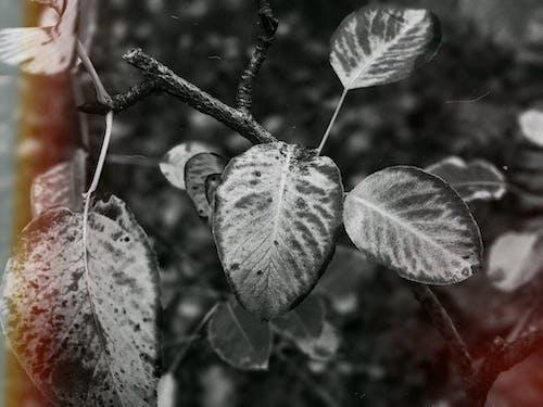 Ilmainen kuvapankkikuva tunnisteilla epätarkka tausta, kasvaa, kasvaminen, kasvu