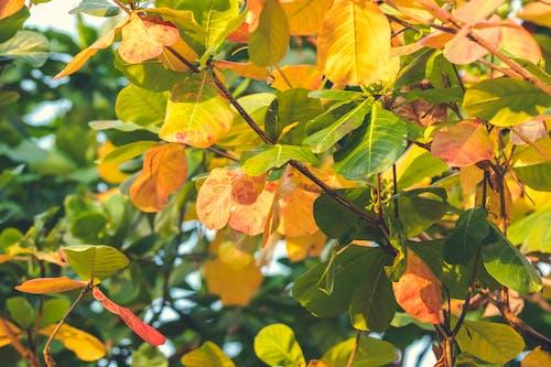 Darmowe zdjęcie z galerii z bujny, drzewo, gałąź, kolorowy